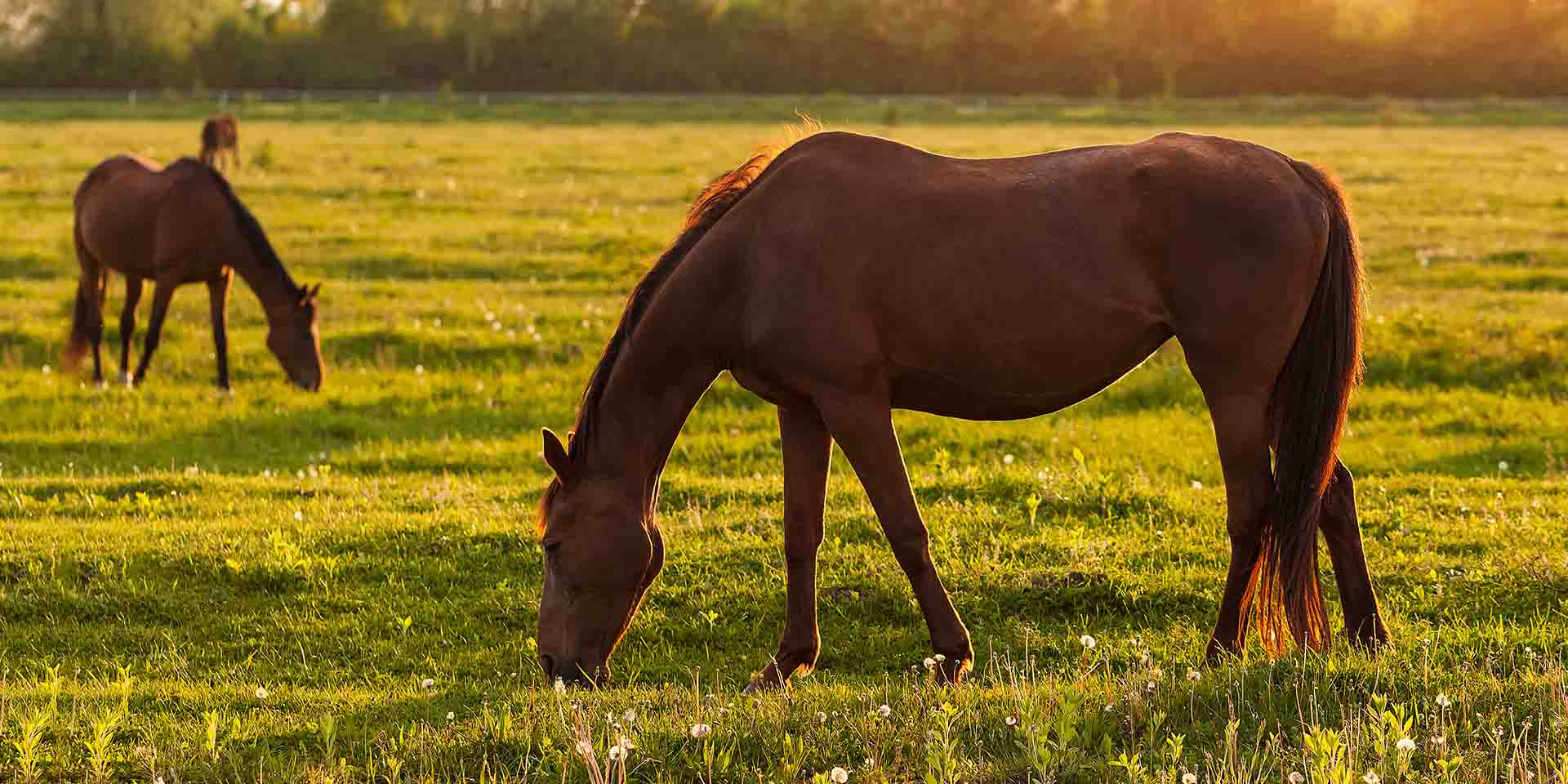 What Makes Ocala the Horse Capital of the World?