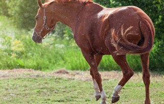 Managing Horses During the Rainy Season