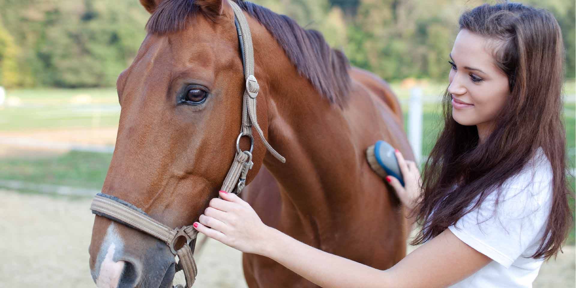 What does Golden Ocala offer to the horse enthusiast?