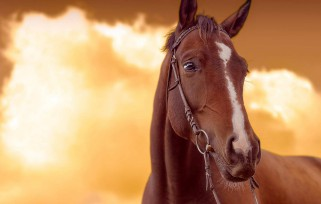 A horse with the sunset.