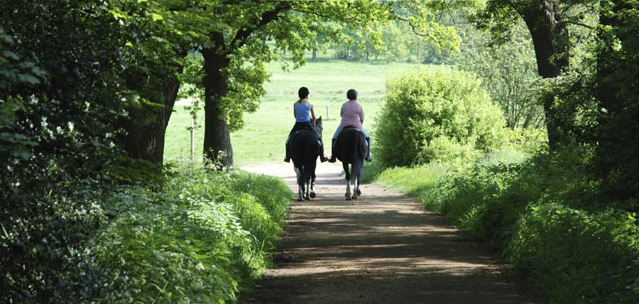 Horseback riding under canopy of trees.