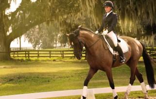 Ocala dressage horse and rider