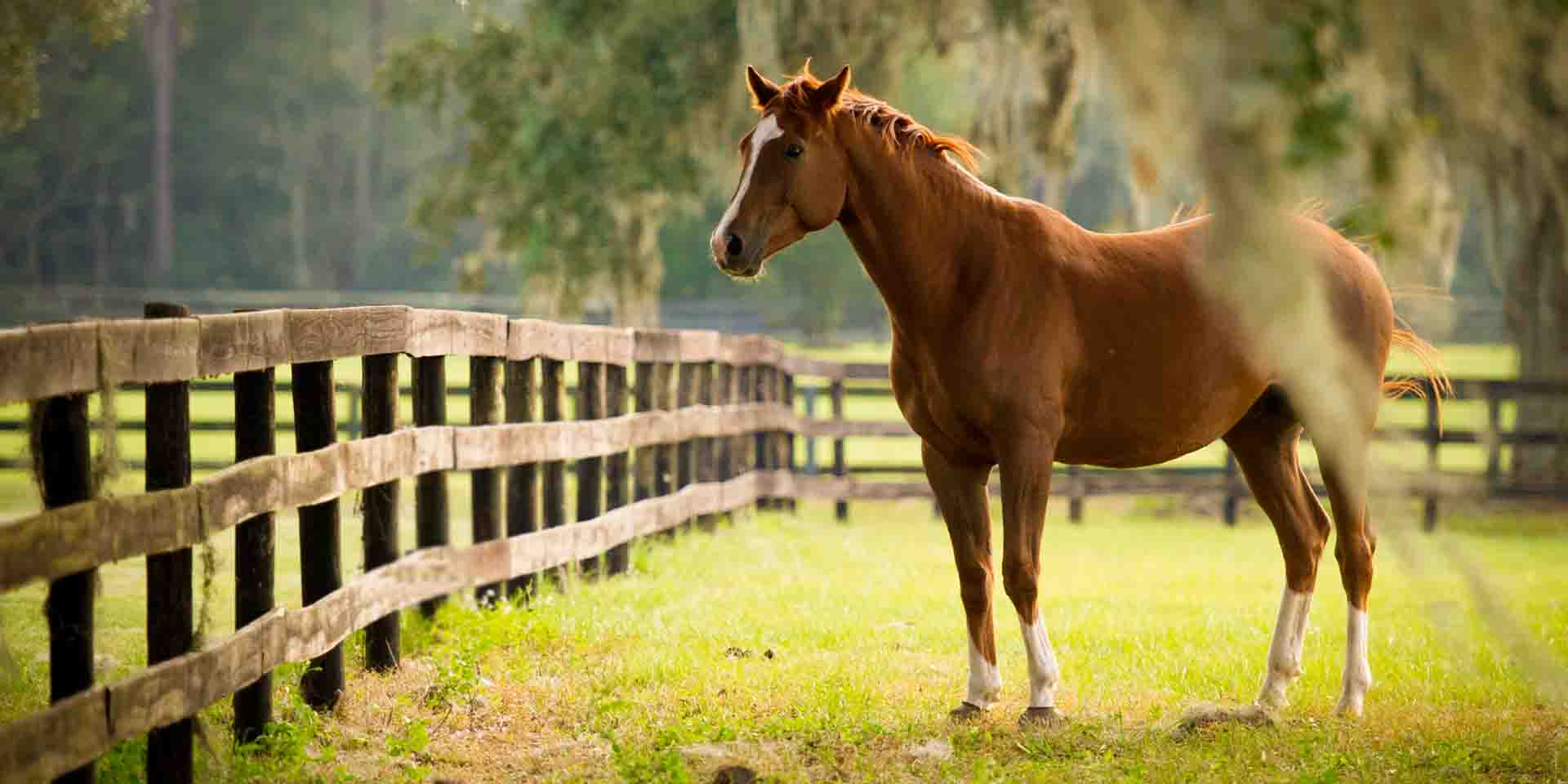 Triple A Rental >> The Horse Capital of the World | Golden Ocala