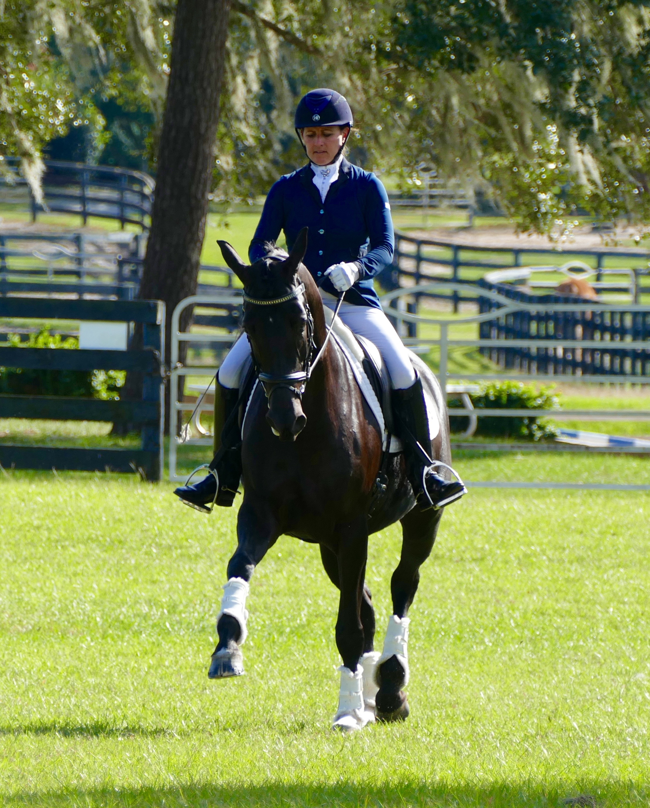 Dressage Enthusiasts Find Ocala The Perfect Place To Call Home