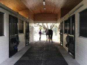 Girl in Barn with Horse